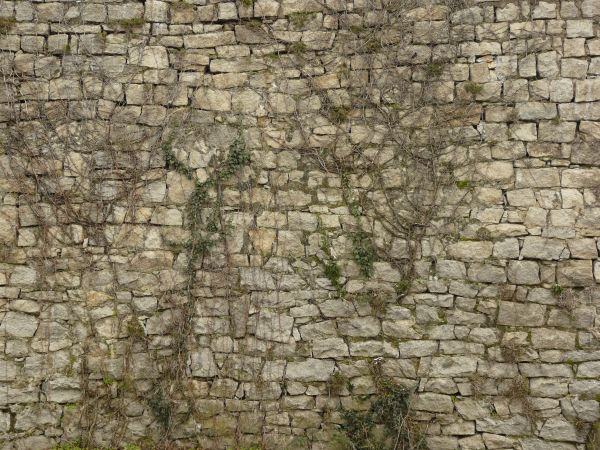 Texture of uneven stone wall with thin vines and some green vegetatino on  surface. old wall textures   Texturelib