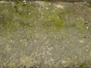Rough concrete ground texture with rocks embedded in surface and green algae.