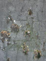 Concrete pavement texture in dark grey tone with slightly worn surface and dirt.