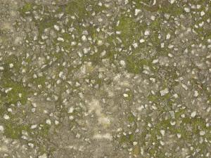 Grey concrete floor texture with rocks and green algae throughout surface.