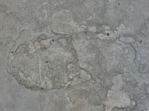 Ground made of concrete in grey tone with irregular surface and cracks.