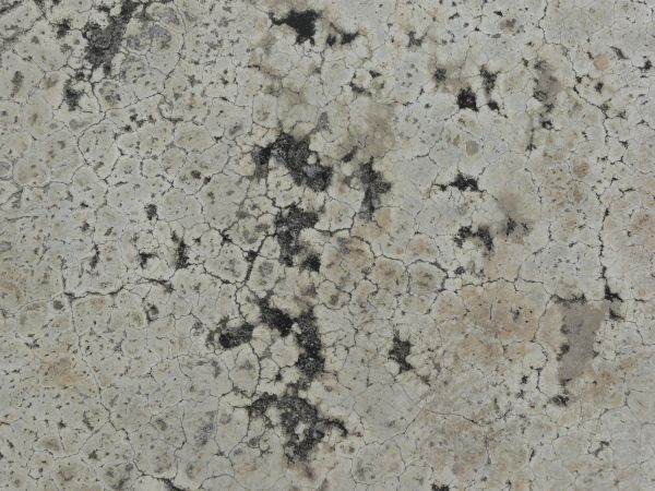 Concrete floor texture with dark spots and myriads of thin cracks  throughout surface. cracked concrete floor 0060   Texturelib