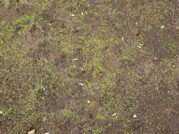 Soil grass texture images galleries for Lawn topsoil