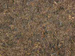 forest floor texture seamless. ground texture containing dry twigs and grass among dark arid dirt forest floor seamless f