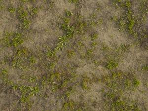 dirt grass texture seamless. Texture Consisting Of Small Green Plants In Tan Sand. Grass And Seamless Dirt T