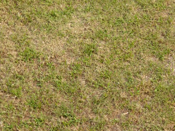Lawn with long green grass and dry patches.