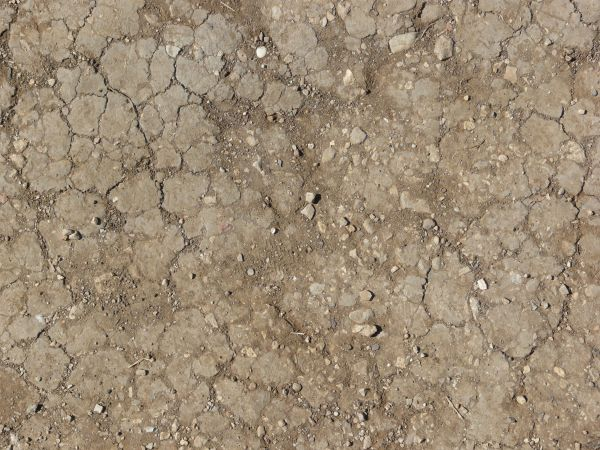 Dirt And Stone : Cracked dirt with rocks texturelib