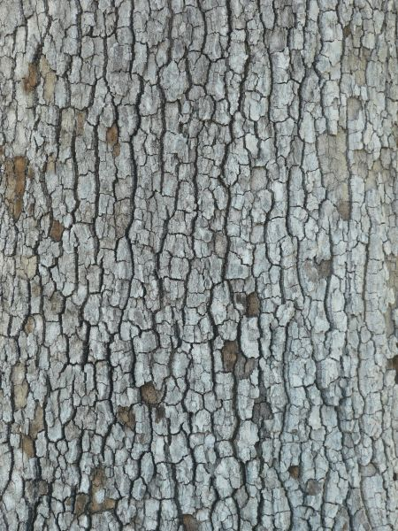 Nature Images 2mb: Bark Texture 0014