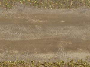 dirt texture seamless. Seamless Texture Of Wet Dirt Road With Vegetation And Dry Leaves At Edges.