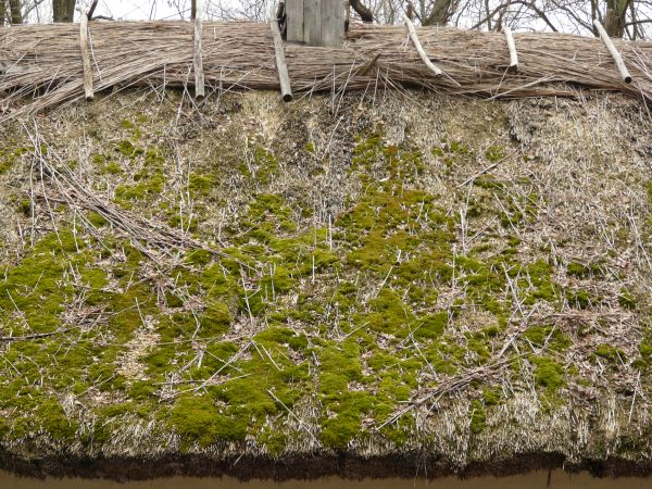 Roof Texture Of Thatched, Straw Material With Large Patches Of Moss.