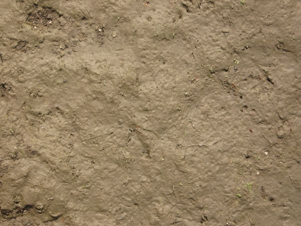 brown mud texture 0034 - Texturelib