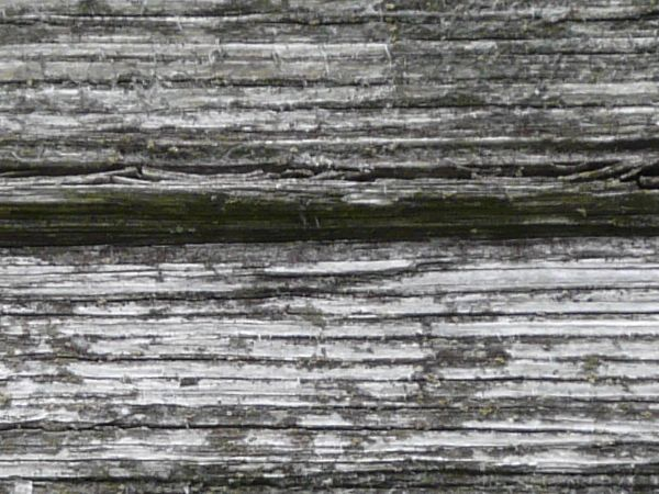 Old white wood texture, with a rough horizontal grain and areas of grey wood visible beneath the paint.