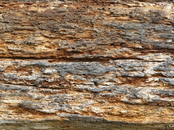 Rotting wood texture